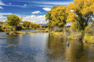 Late Summer Fishing Tips | Rocky Bob's Fly Fishing Rods & Custom Knives